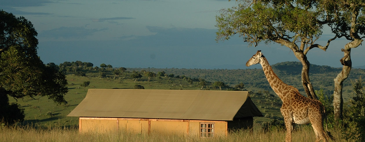 Giraffe and Chalet