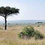 Masai Mara| Wildebeest Migration| Mara West| Park Rules