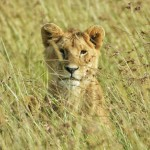 MASAIMARA_Mara West Wildlife Safaris Maasai Mara Game Park_May 19th