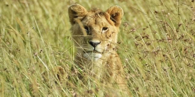 MASAIMARA_Mara West Wildlife Safaris Maasai Mara Game Park_May 19th